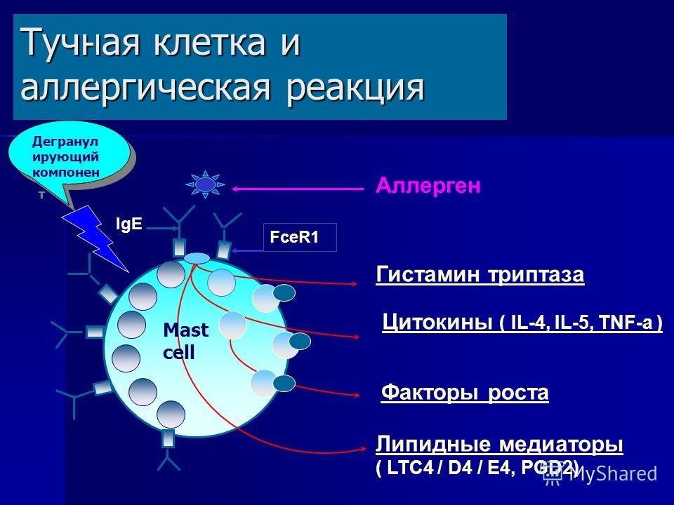 тучная клетка при аллергии